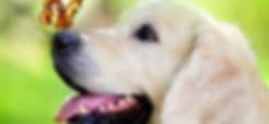 Dog with butterfly on nose. Hund med smmerfugl på næsen. Hellerup Dog Walk tilbyder adfærdsvejledning og hundehave hundebørnehave til hunde i København Nordsjælland, Frederiksberg og Storkøbenhavn professionel hundetræning og hundeluftning kærlighed til hunde