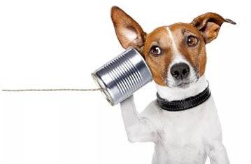 Hund ringer til Hellerup Dog Walk's professionelle hundelufter for at bestille Danmarks bedste hundehave i København, Storkøbnhavn, Nordsjælland og Frederiksberg
