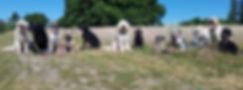 Hellerup Dog Walk på udflugt til Bernstorffparken i Charlottenlund. 5-stjernet professionel hundeufer for dog's København Nordsjælland, Storkøbenhavn Frederiksberg på udflugt i Bernstorffparken i Charlottenlund