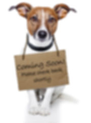Hund med skilt. Kommer snart. Hellerup Dog Walk. Pack Walk. Hundebørnehave. Hundehave. Professionel hundelufter. Hundeluft. Hundelufter i københavn. Daycare for dogs. Doglover. Hundekærlighed.