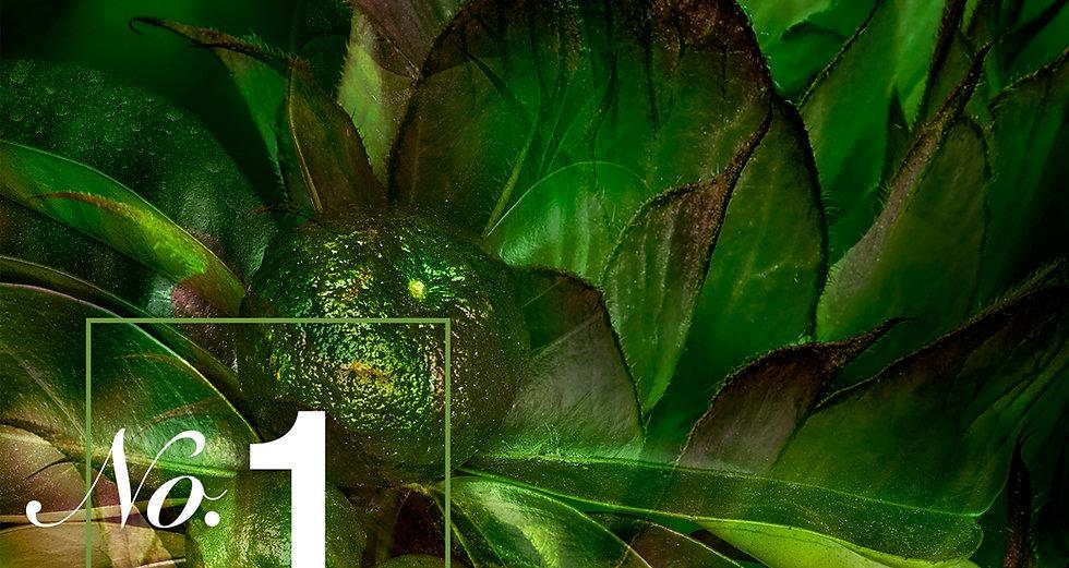 No. 1 Bergamot Sage