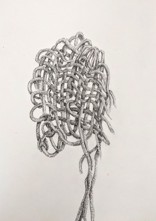 Jill Price, Embodied Entanglement_Jenny, 2021, graphite on paper, 8 x 11.5.jpg