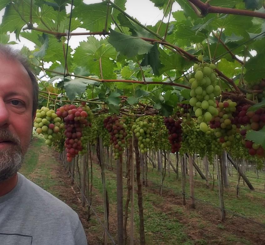 Nardello's Winery