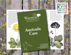 Woottens Plants Auricula Leaflets