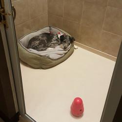 cage free dog room