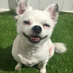 Some happy pups! #dogdaycare #dogsofinstagram #pupsparadise #smile #excited #doggydaycare #doggieday