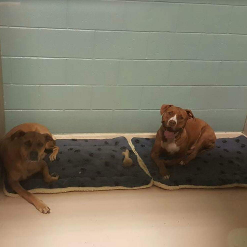family dog boarding