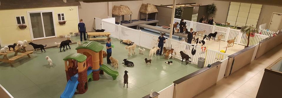 Pups Paradise dog daycare facility with dogs playing indoors