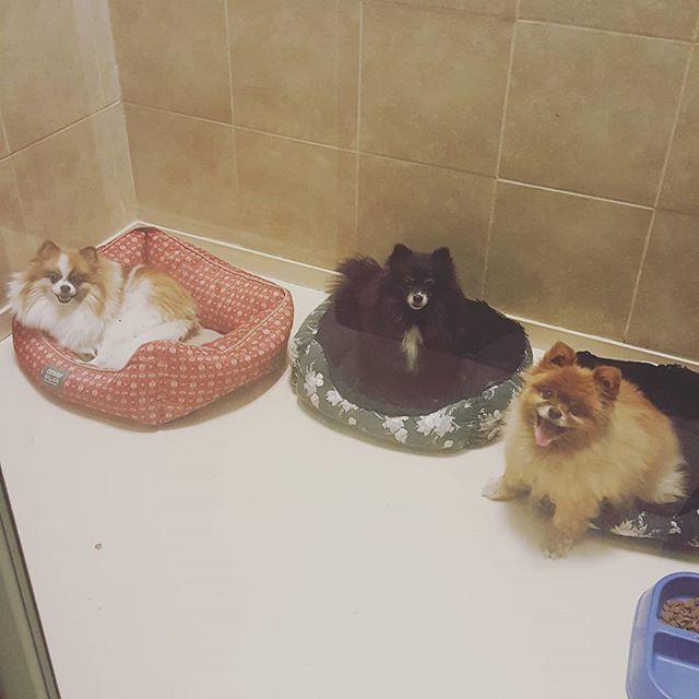 multiple dog boarding