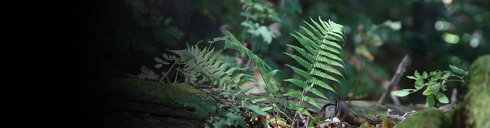 príroda-1_Č.jpg