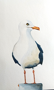 seagul_watercolor.png