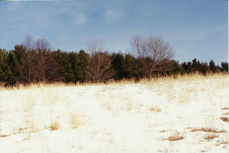 Stonepatch - Winter 18.jpeg