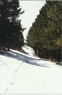 Stonepatch - Winter 14.jpeg
