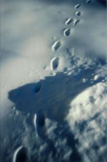 Stonepatch - Winter 31.jpeg