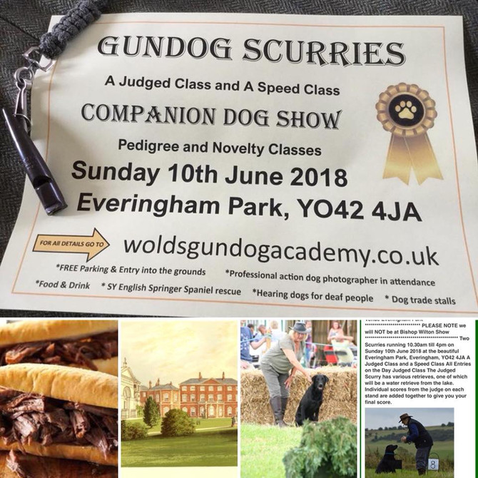 Gun dog scurries and companion dog show - Sunday 10th June