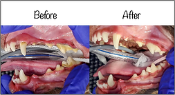 Dental Before After.png