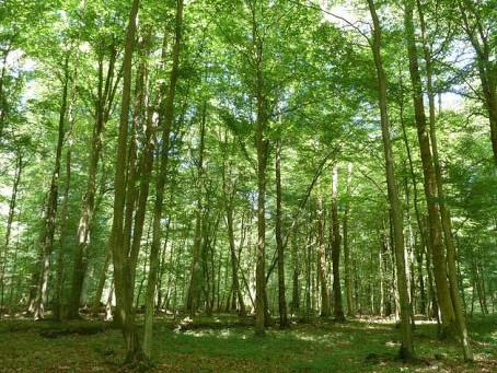 Loisirs – Des balades pour découvrir la forêt de Malissol