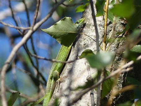 Environnement - Des sorties nature pour découvrir la biodiversité