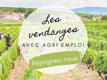 Société - Les vignerons recrutent pour les vendanges