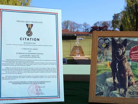 Société - Décoration posthume pour le chien de l'équipe cynophile de la gendarmerie de Vienne