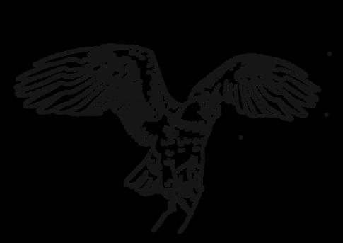Weisskopfseeadler | zum Download