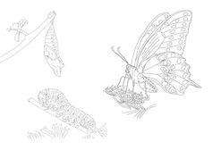 Raupe, Puppe &Schmetterling | zum Download