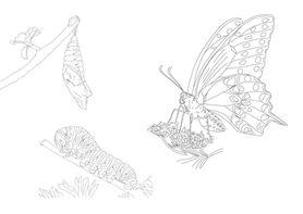 Raupe, Puppe &Schmetterling   zum Download
