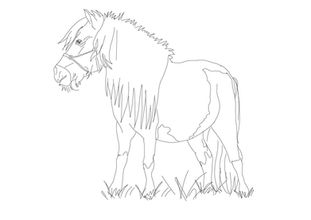 Shetlandpony | zum Download