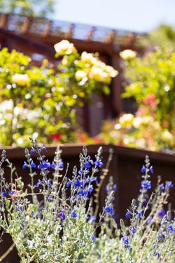 Happy Bee Garden!