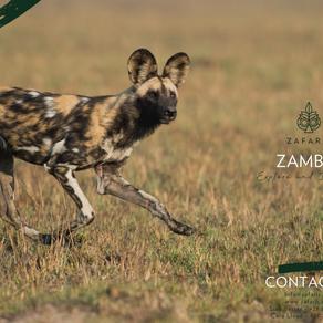 ZAMBIA: Explore & Discover