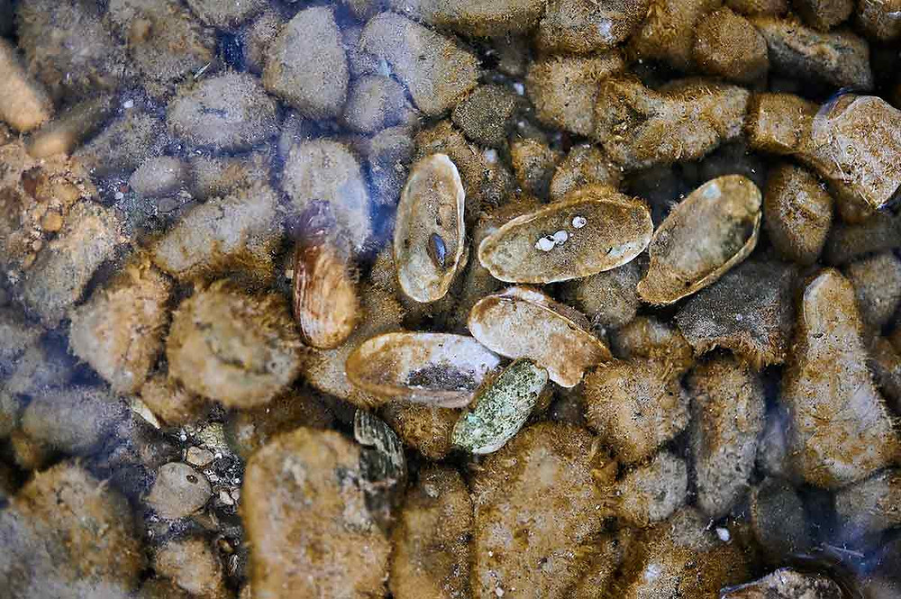 Pilsensee Ausflug mit Kindern Muscheln sammeln