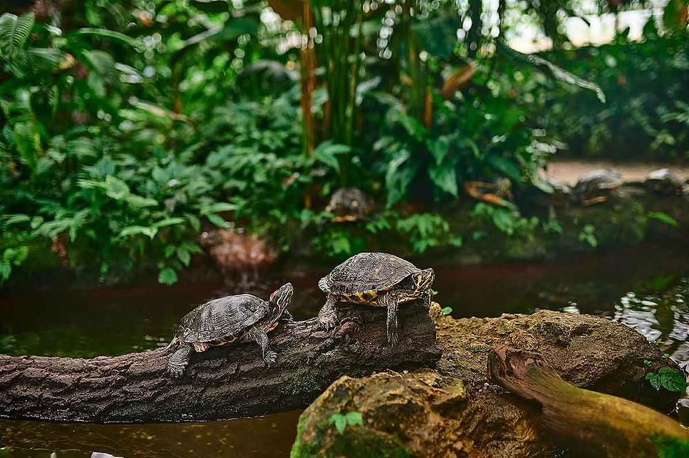 Schildkröten Botanischer Garten München
