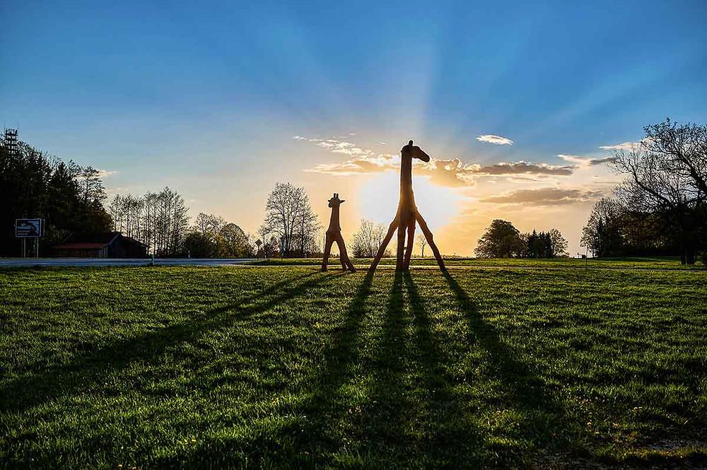 Familienausflug zum Starnberger See in Bernried Giraffen