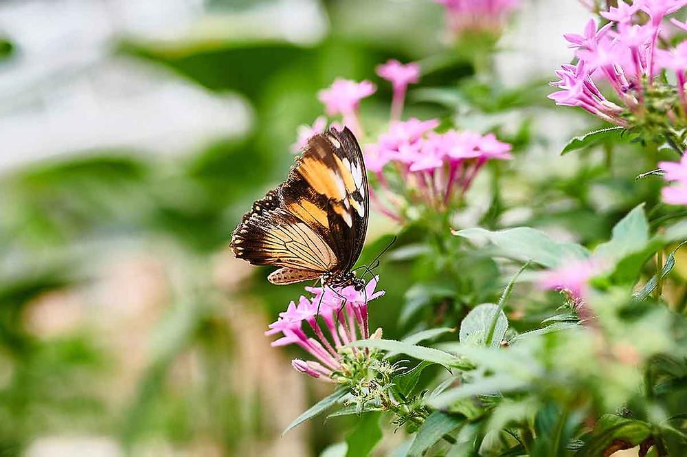 Schmetterlinge Botanischer Garten München