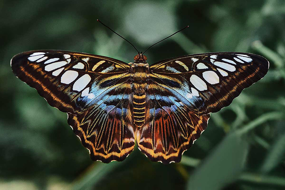 Schmetterlings Ausstellung Botanischer Garten München