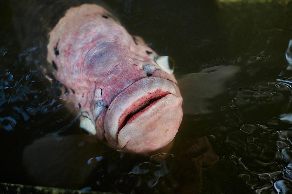 Botanischer Garten München Riesengurami Fisch Anna