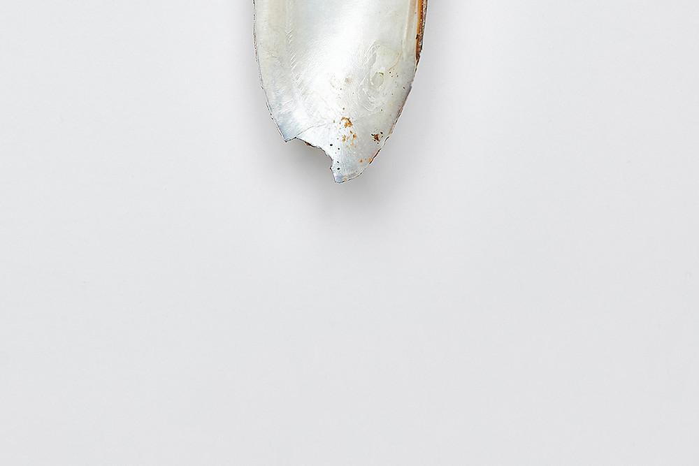 Muscheln Shell Shellfish