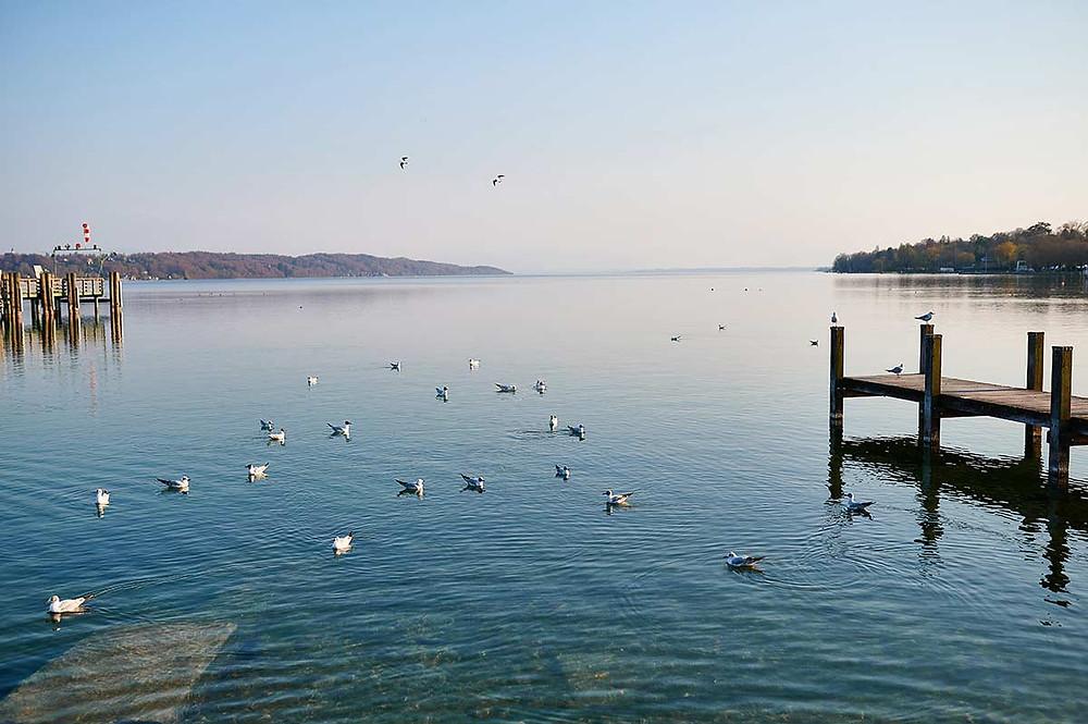 Familienausflug nach Starnberg am Starnberger See Möwen Wasservogel