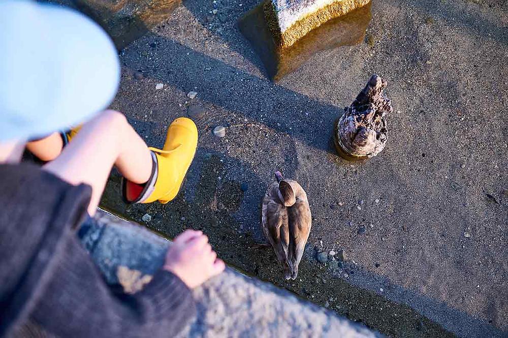 Familienausflug nach Starnberg am Starnberger See Kinder Enten