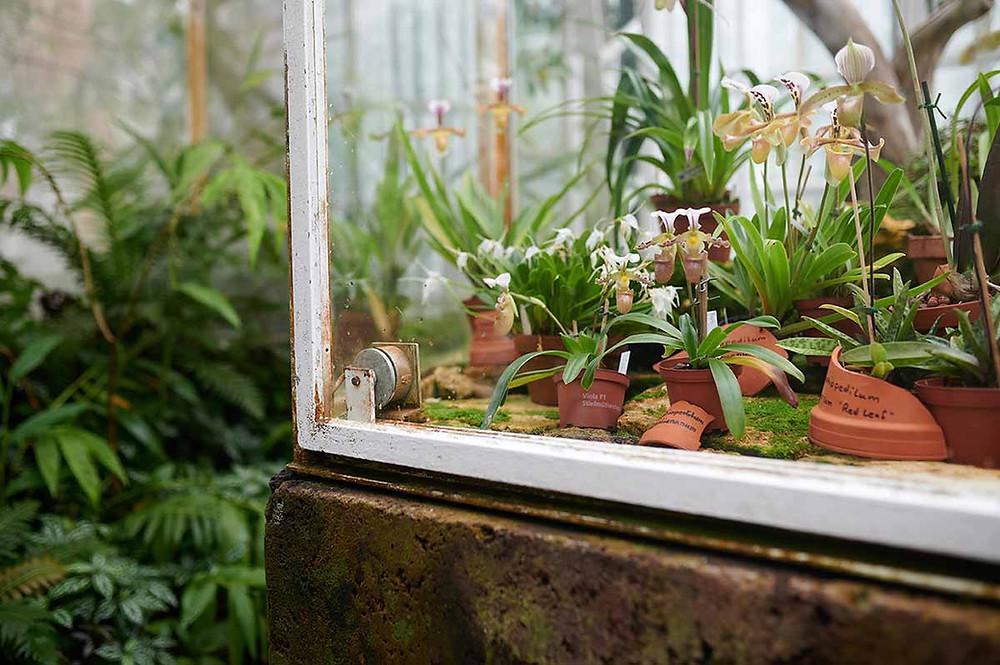 Orchideenhaus Botanischer Garten München