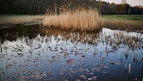 Froschweiher in München Aubing im April