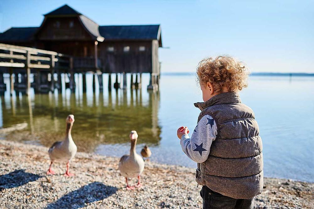 Familienausflug nach Stegen am Ammersee Enten