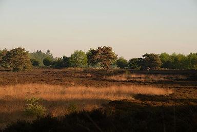 Landgoed eese 4.jpg