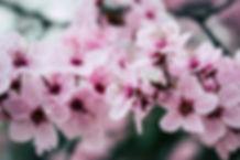 beautiful-blooming-blossom-992734.jpg