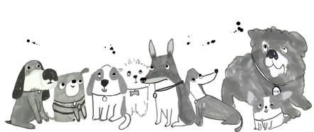 dog club