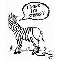 stress-zebra.jpg