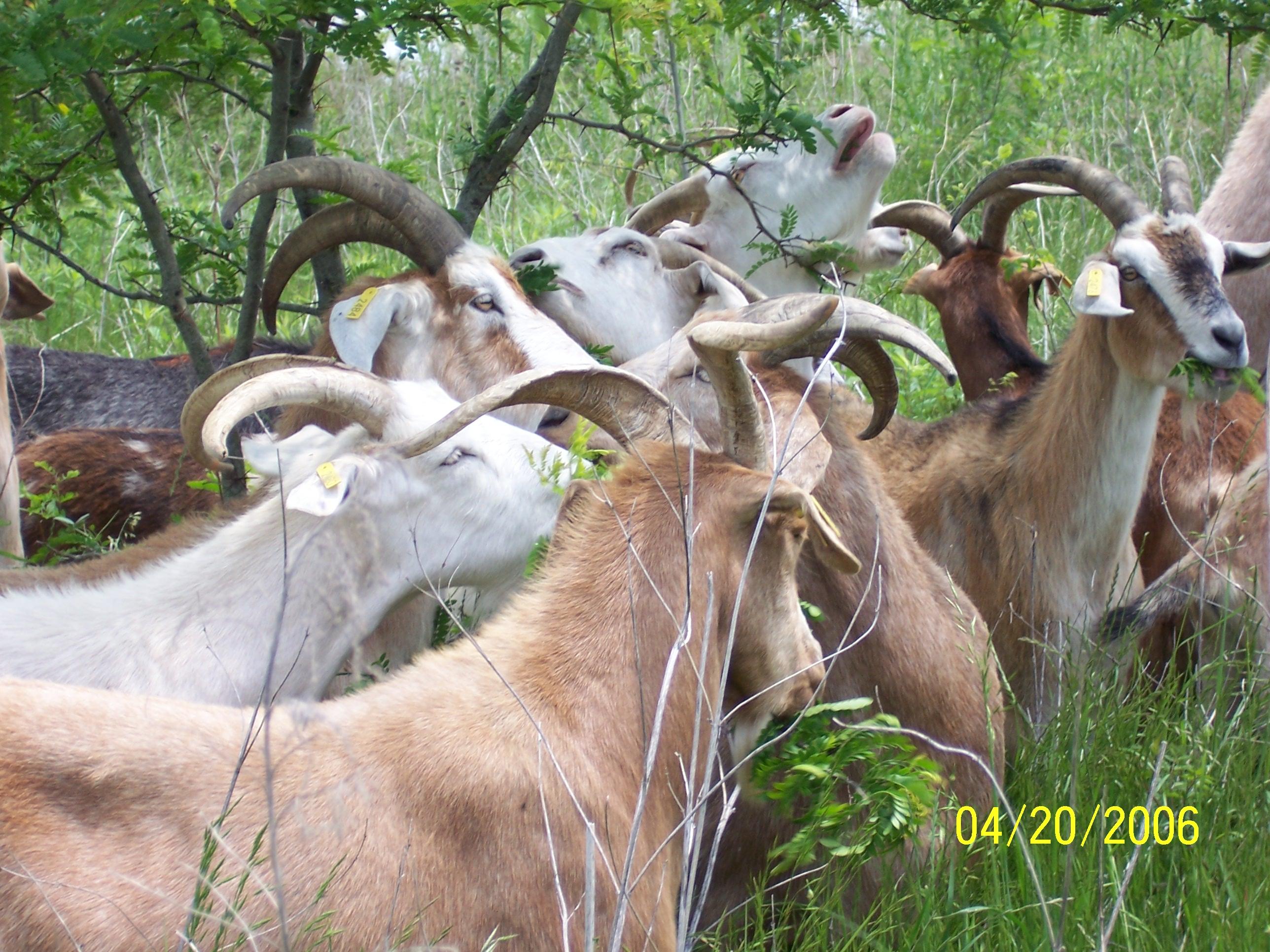 Kiko Wethers Reclaiming Land