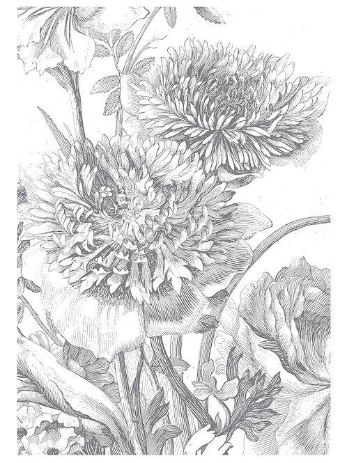 Fotobehang Engraved Flowers lV - WP-330
