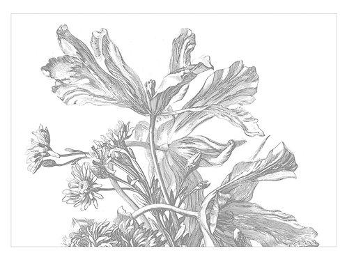 Fotobehang Engraved Flowers - WP-673