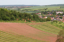 Weinberg mit Blick auf Weinsheim